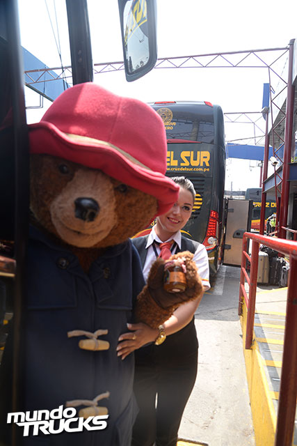 Cruz-del-Sur---Oso-Paddington-(7)